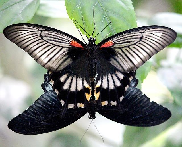 butterflies-1382110_640